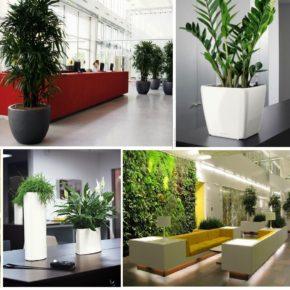Озелененине офиса - фото (1)