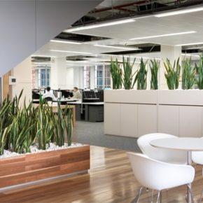 Озелененине офиса - фото (101)