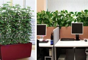 Озелененине офиса - фото (102)