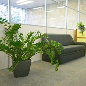 Озелененине офиса - фото (103)