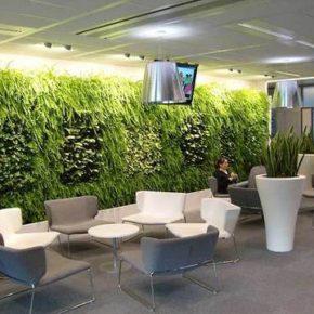 Озелененине офиса - фото (104)