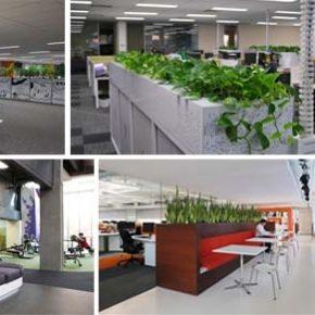 Озелененине офиса - фото (105)
