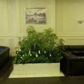 Озелененине офиса - фото (106)