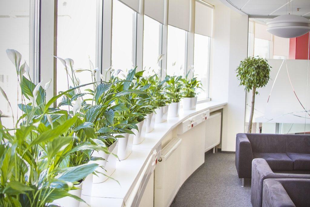 Цветок в офис фото