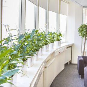 Озелененине офиса - фото (13)