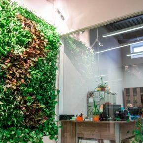 Озелененине офиса - фото (15)