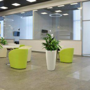 Озелененине офиса - фото (16)
