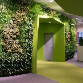 Озелененине офиса - фото (17)