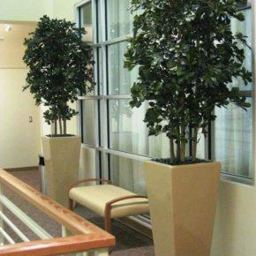 Озелененине офиса - фото (18)