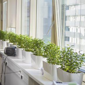 Озелененине офиса - фото (19)