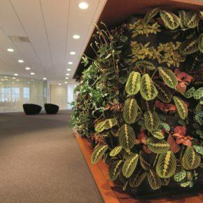 Озелененине офиса - фото (2)