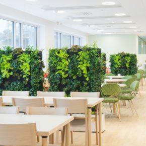 Озелененине офиса - фото (20)
