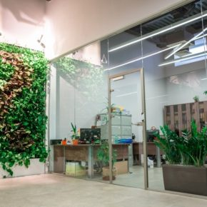 Озелененине офиса - фото (22)