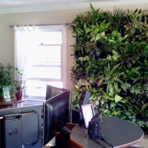 Озелененине офиса - фото (24)
