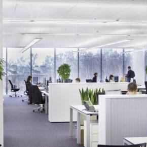 Озелененине офиса - фото (25)
