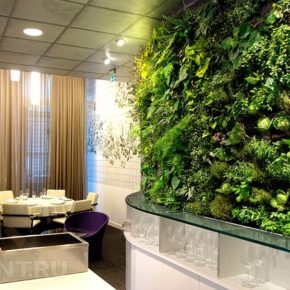 Озелененине офиса - фото (26)