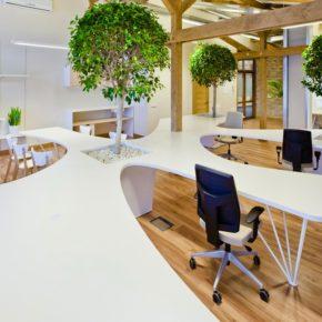 Озелененине офиса - фото (27)