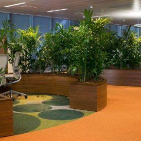 Озелененине офиса - фото (28)