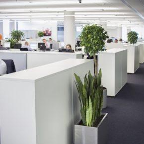 Озелененине офиса - фото (29)