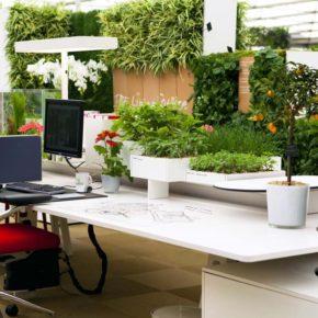 Озелененине офиса - фото (30)