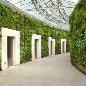Озелененине офиса - фото (31)