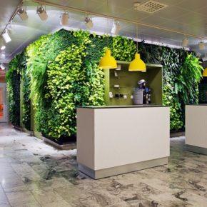 Озелененине офиса - фото (33)