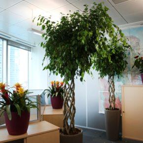 Озелененине офиса - фото (34)