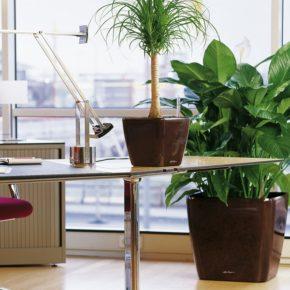 Озелененине офиса - фото (35)