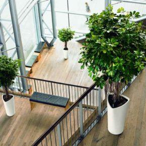 Озелененине офиса - фото (36)