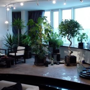 Озелененине офиса - фото (37)