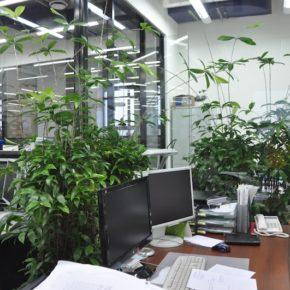 Озелененине офиса - фото (46)