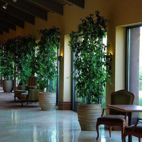 Озелененине офиса - фото (47)