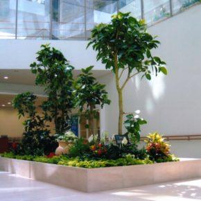 Озелененине офиса - фото (5)