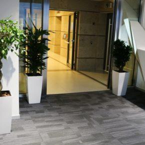 Озелененине офиса - фото (50)