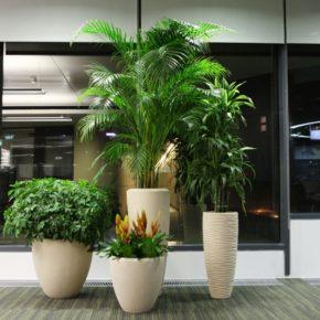 Озелененине офиса - фото (55)