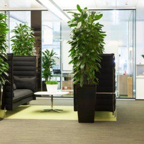 Озелененине офиса - фото (56)