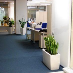 Озелененине офиса - фото (59)