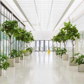 Озелененине офиса - фото (64)
