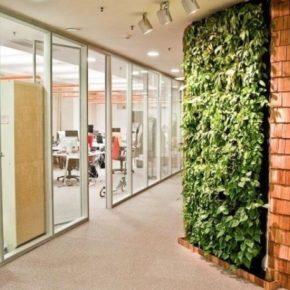 Озелененине офиса - фото (68)