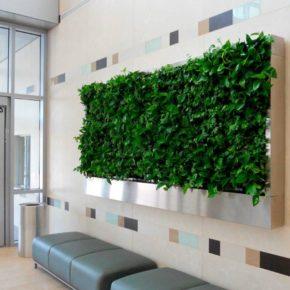Озелененине офиса - фото (69)