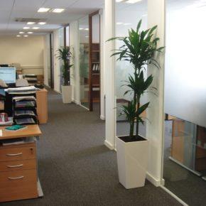 Озелененине офиса - фото (7)