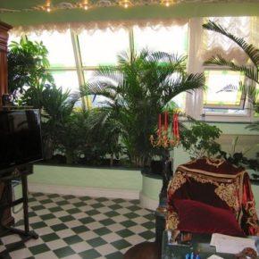 Озелененине офиса - фото (70)