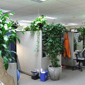 Озелененине офиса - фото (80)