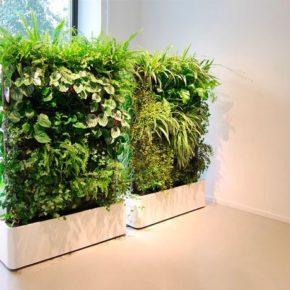 Озелененине офиса - фото (83)