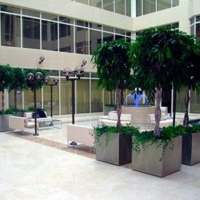 Озелененине офиса - фото (84)
