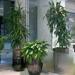Озелененине офиса - фото (87)