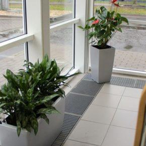 Озелененине офиса - фото (88)