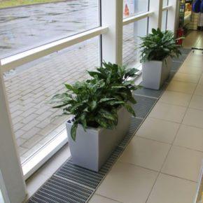 Озелененине офиса - фото (91)