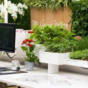 Озелененине офиса - фото (94)
