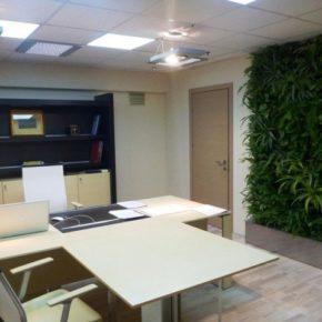 Озелененине офиса - фото (97)